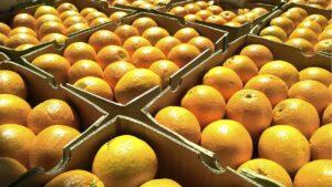 Frio industrial naranjas
